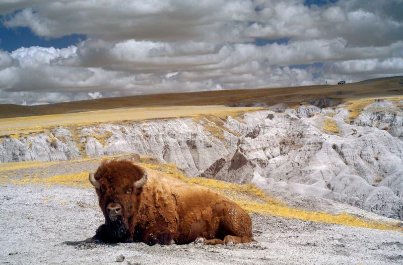 Badlandsnationalpark som ?r infrar?d South Dakota royaltyfria foton