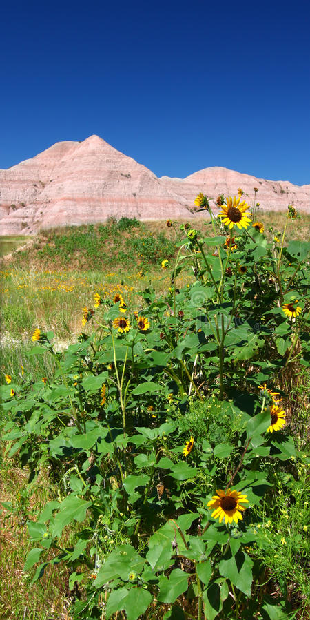 badlandsnationalpark USA arkivfoton