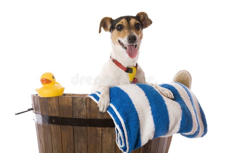Badtijd voor deze Gelukkige Hond royalty-vrije stock afbeeldingen