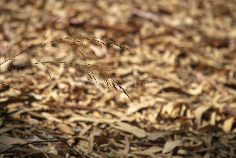Badyl w tło liściach spadać zdjęcie royalty free
