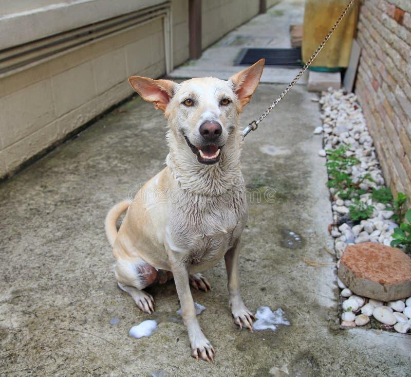 Badzeit für glücklichen Hund stockfoto