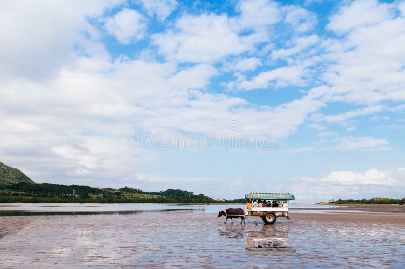Baffalo-Warenkorbausflug auf Strand bei Iriomote, Okinawa, Japan lizenzfreies stockbild