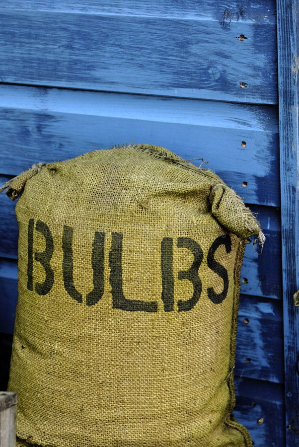 Bag of bulbs. Close up the sack of bulbs royalty free stock photo