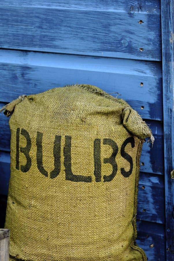Free Bag Of Bulbs Royalty Free Stock Photo - 8750405