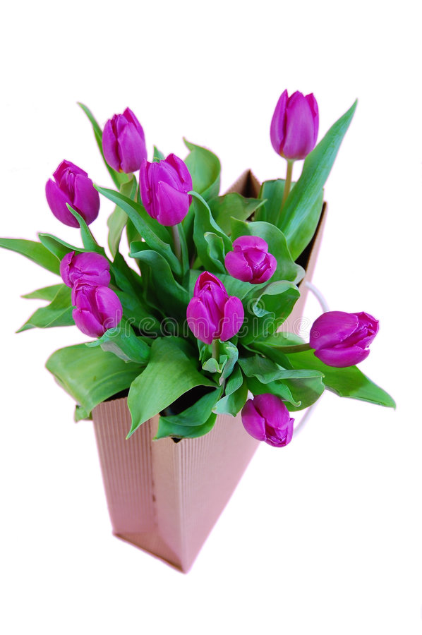 Download Bag of Tulips stock photo. Image of ornate, greeting, beauty - 7529514