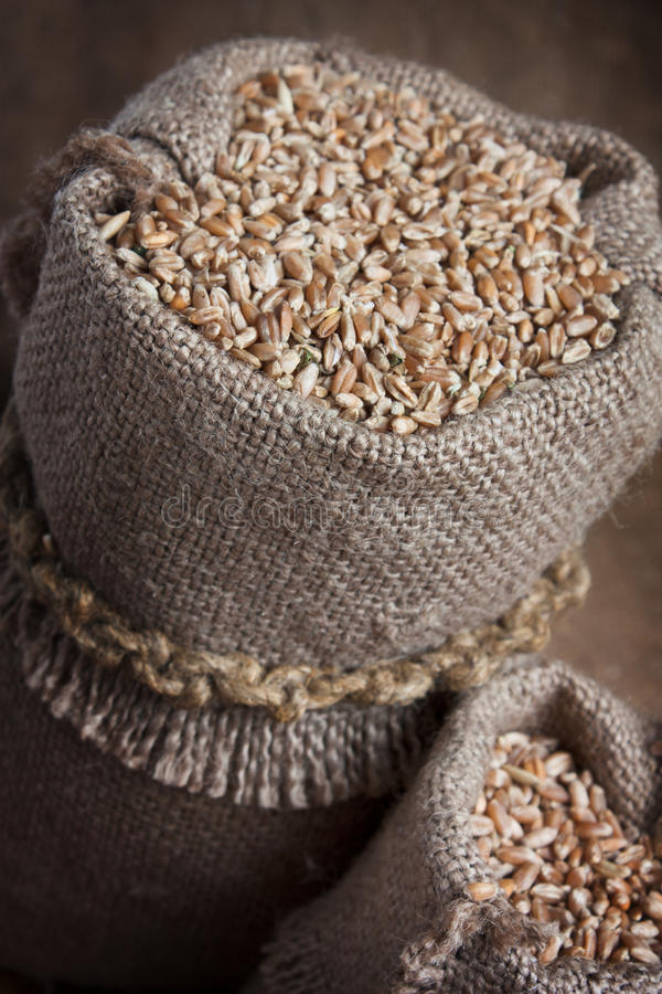 Bag of wheat in the bakery stock image