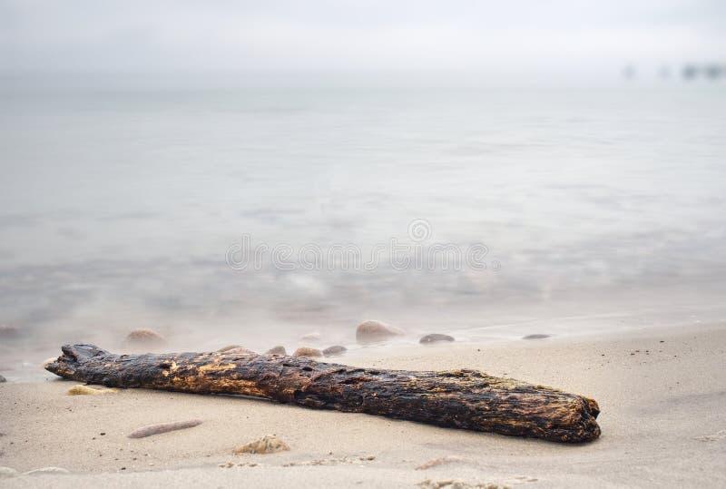 Bagażnik na tropikalnej plaży w zmierzchu czasie Przegniły bagażnik zdjęcia stock