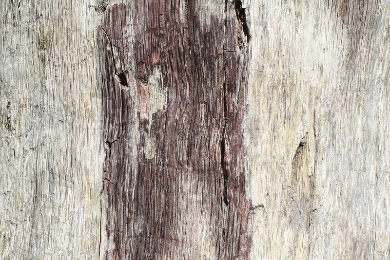 Bagażnik osika bez barkentyny, afektowany insektami i atmosferycznymi zjawiskami w naturalnych warunkach Oryginał embossed wzór zdjęcie royalty free