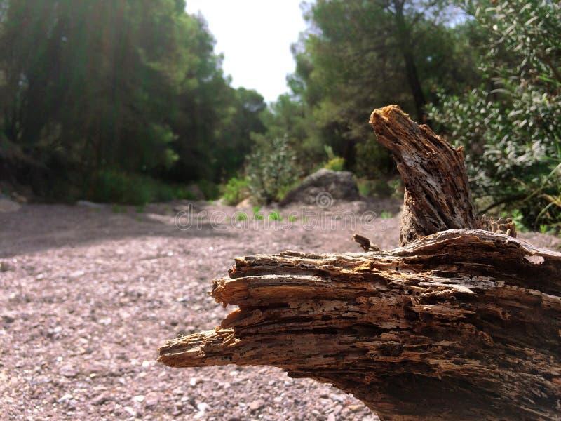 Bagażnik w suchym riverbed zdjęcie stock