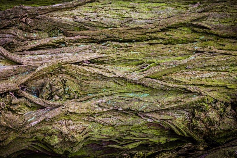 Bagażnik zielony i brown drzewo textured zdjęcie stock
