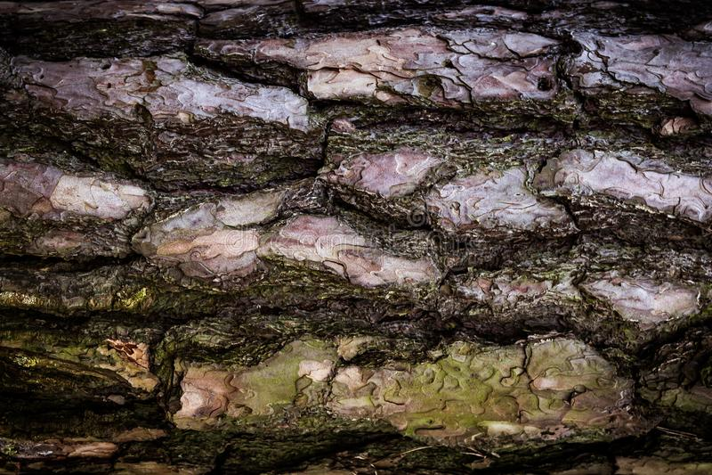 Bagażnika drzewo textured obrazy stock