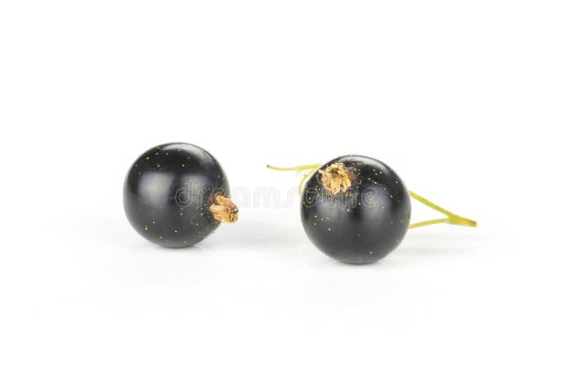 Baga crua fresca do corinto preto isolada no branco fotografia de stock royalty free