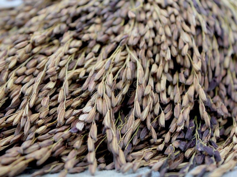 Baga do arroz imagens de stock