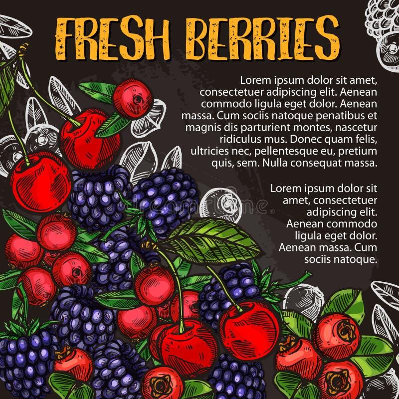 A baga e o fruto riscam o cartaz do esboço no quadro-negro ilustração do vetor