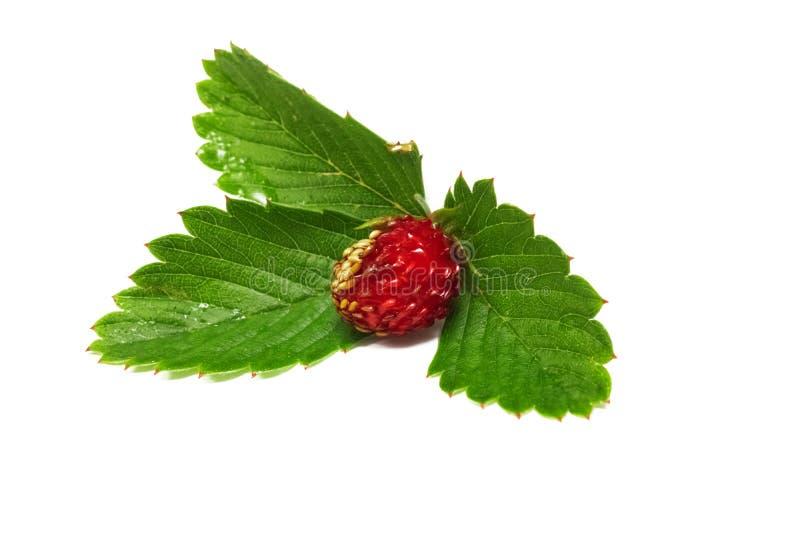 Baga vermelha da morango com as folhas verdes, isoladas no fundo branco fotos de stock royalty free