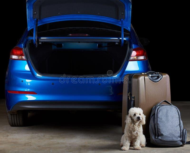 Bagage de garde de chien à côté de voiture photographie stock libre de droits