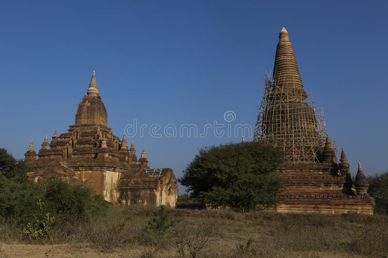 Bagan historic temple and stupa with bamboo scaffolding. Put up after the 2013 earthquake, Myanmar stock image