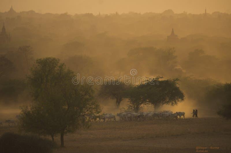 Bagan - Myanmar fotografia de stock royalty free