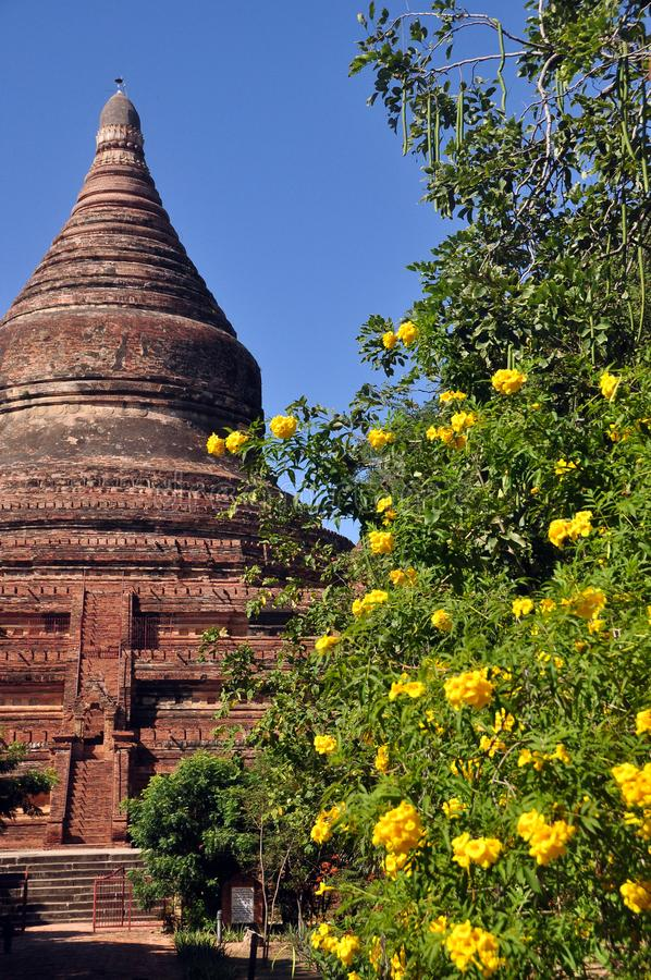 BAGAN, MYANMAR - 13 DE NOVIEMBRE DE 2015: Pagoda y flores antiguas ornamentales Herencia de la UNESCO Vista del arbusto amarillo- foto de archivo libre de regalías
