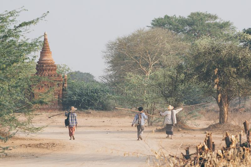 Bagan, Myanmar - March 2019: tamarind pickers walking next to Buddhist temple on background stock photo