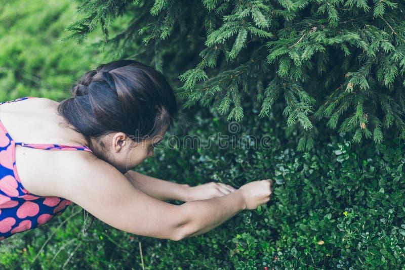 Bagas da colheita da jovem mulher nas montanhas fotos de stock royalty free