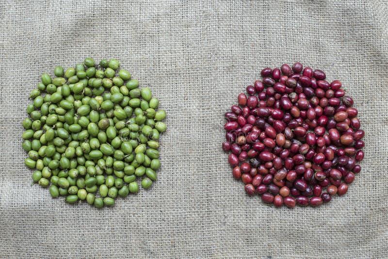 Bagas de café vermelhas e verdes foto de stock royalty free