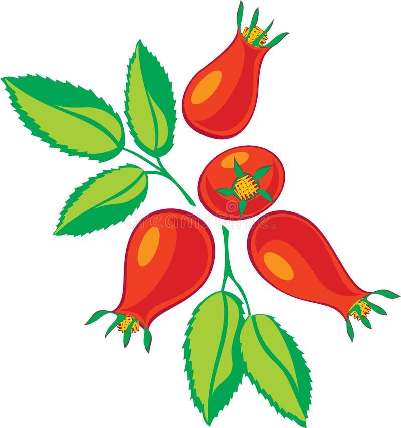 Bagas e folhas vermelhas do verde ilustração stock