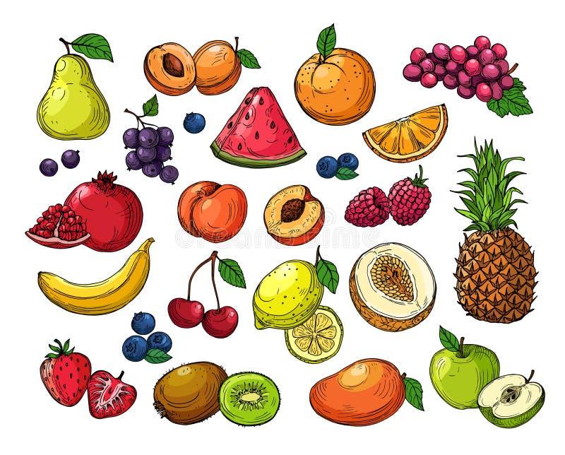 Bagas e frutos dos desenhos animados Uvas do abacaxi, maçã da pera, manga alaranjada, quivi do melão, limão da banana O vetor iso ilustração royalty free