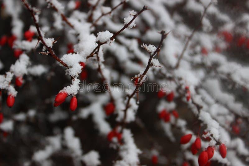 Bagas e neve imagens de stock royalty free