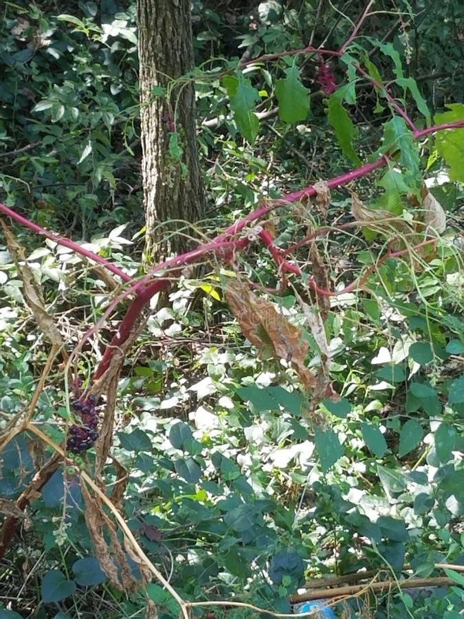 Bagas e plantas bonitas fotografia de stock royalty free