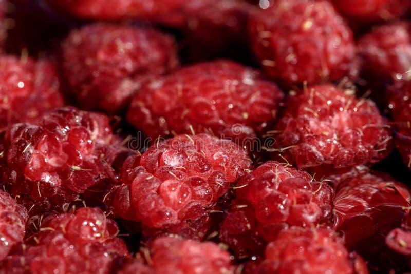 Bagas frescas da framboesa cor-de-rosa, arrancadas somente fotografia de stock