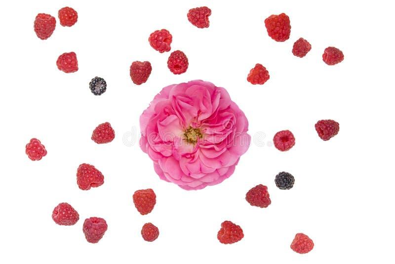 Bagas maduras e flor cor-de-rosa fotos de stock royalty free