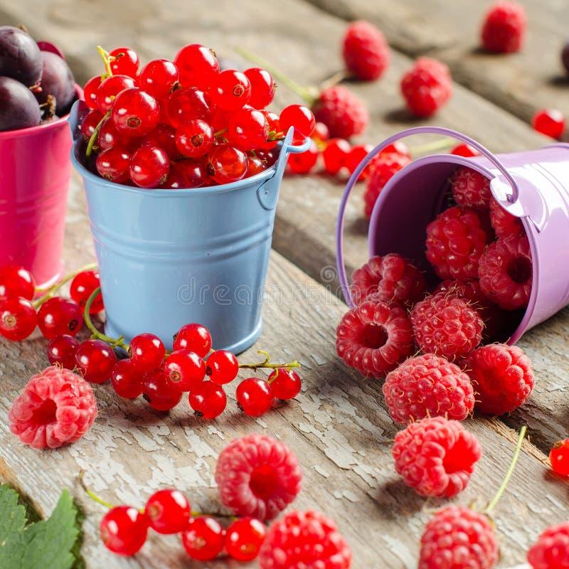 Bagas maduras sazonais Colha corintos vermelhos, framboesas e vá foto de stock royalty free