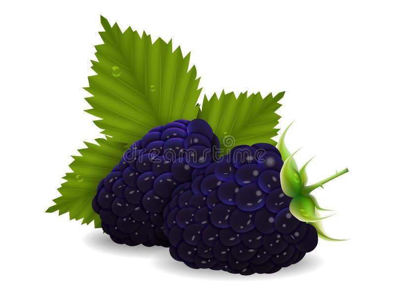 Bagas suculentas deliciosas da amora-preta com folhas em um fundo branco ilustração do vetor