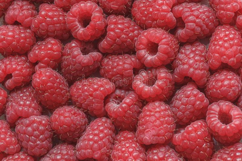 Bagas vermelhas maduras frescas do fundo do close-up das framboesas imagens de stock royalty free