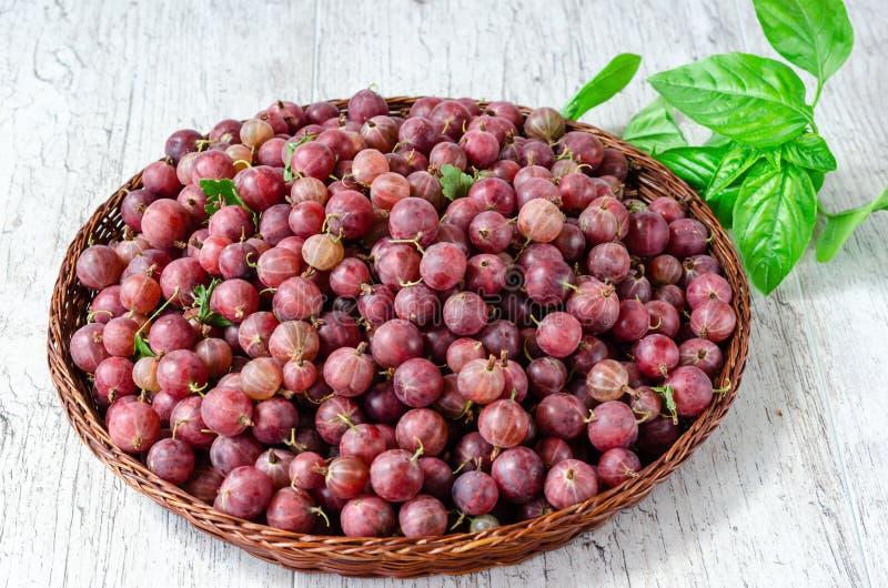 Bagas vermelhas maduras suculentas de uma groselha em uma cesta redonda de vime pequena e de um ramo da manjericão fresca em um f imagem de stock royalty free