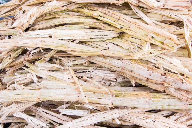 Bagassa della canna da zucchero immagini stock