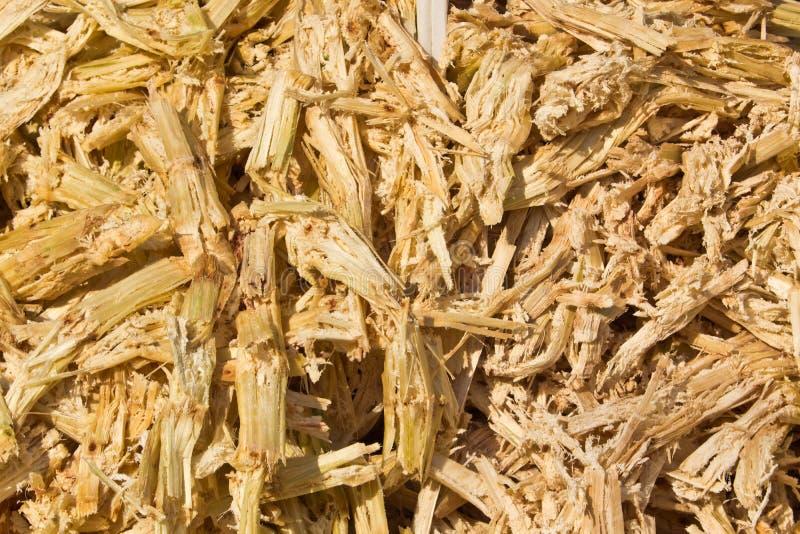 Bagasse de canne à sucre image libre de droits