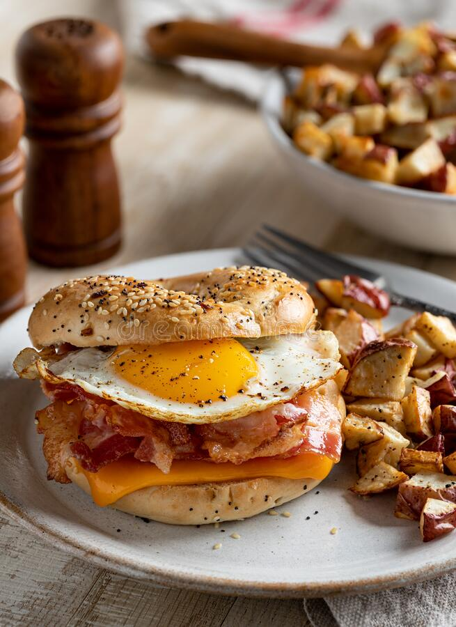 Free Bagel Breakfast Sandwich With Egg Bacon And Cheese Stock Images - 204909944
