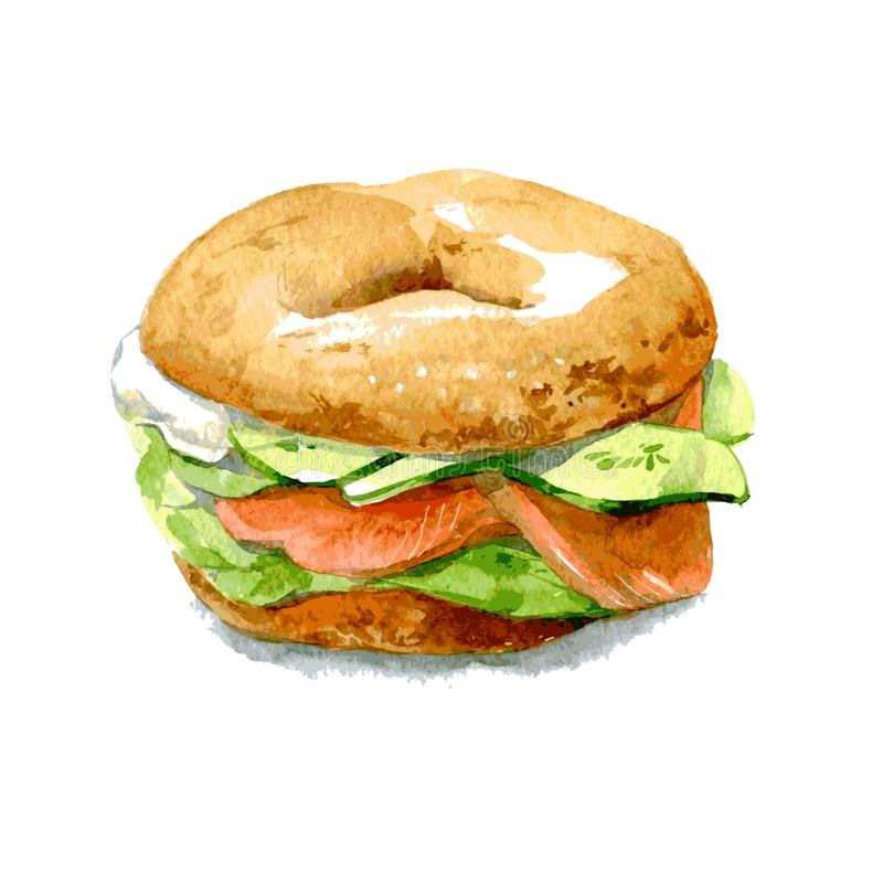 Bagel with cucumber, salmon, cream cheese. Watercolor illustration isolated on white background. Vector. Bagel with cucumber, salmon, cream cheese. Watercolor royalty free illustration