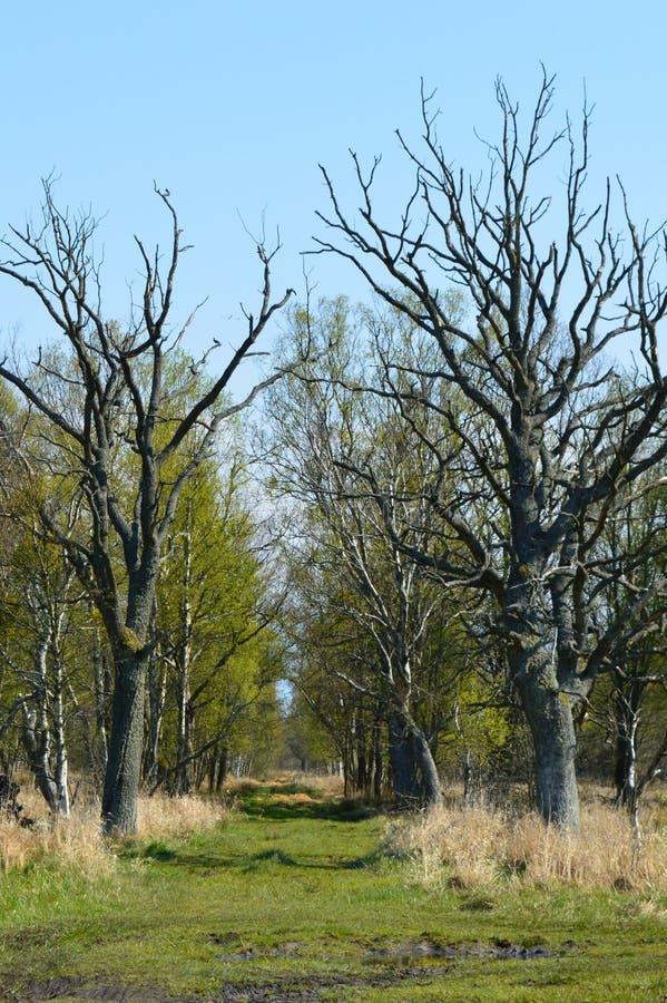 Bagienna lasowa droga zdjęcie stock