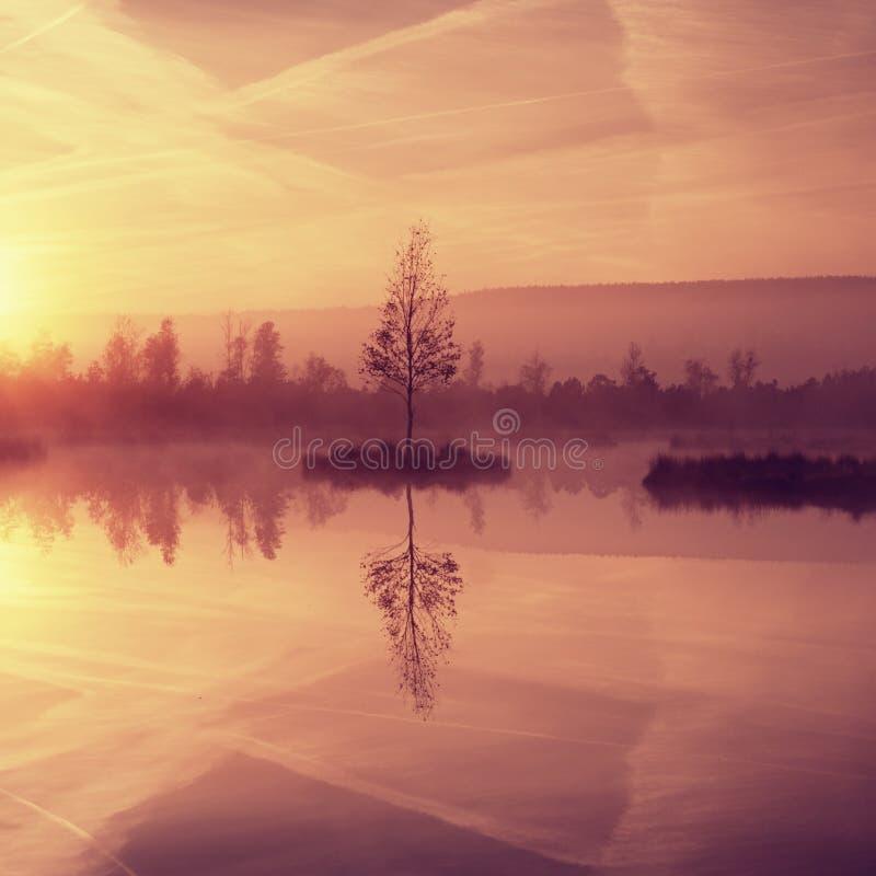 Bagienny halny jezioro z odzwierciedlającym poziomem wody w tajemniczym lesie, zaniechany brzozy drzewo zdjęcie royalty free