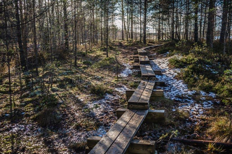 Bagna boardwalk jest popularnym turystycznym miejscem przeznaczenia w Lahemaa parku narodowym Estonia Wczesne wiosny zdjęcia royalty free