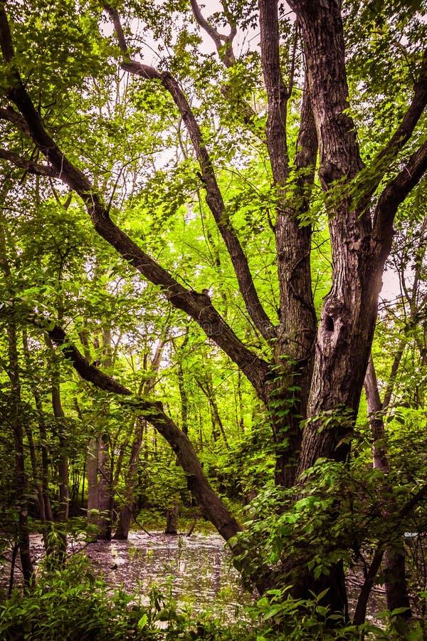 Bagna drzewo zdjęcie stock