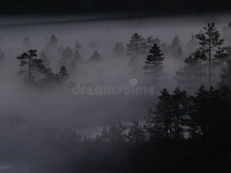 bagna mgły viru zdjęcia stock