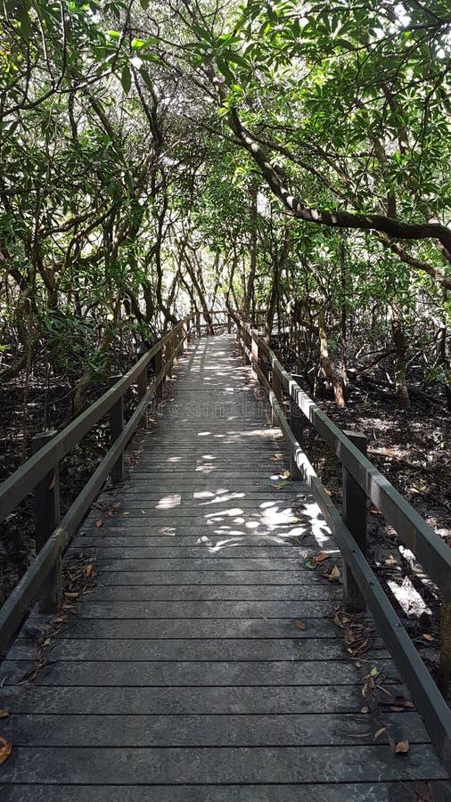 Bagna przejście przez Daintree tropikalnego lasu deszczowego zdjęcie royalty free