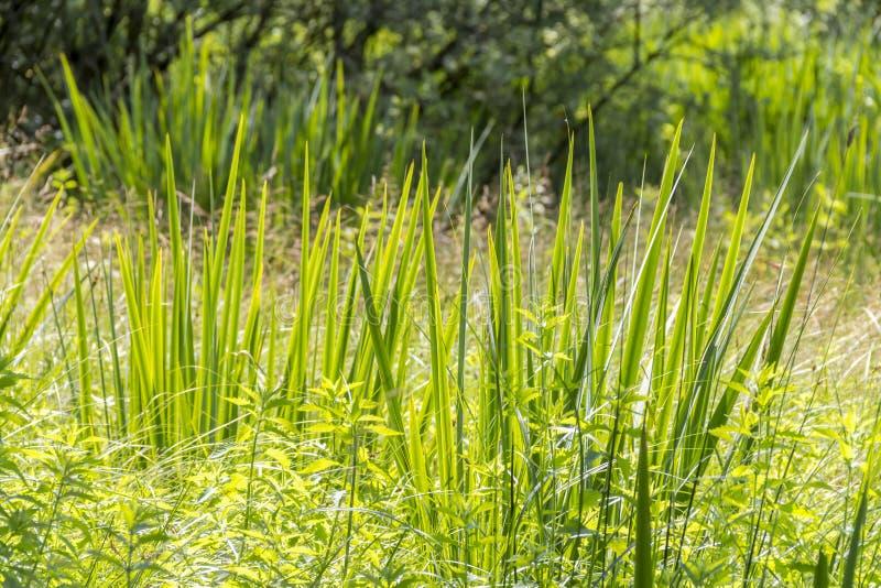Bagna roślinności szczegół zdjęcia stock