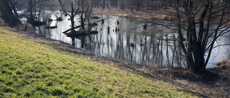 Bagna w jesieni Chłodno ciemny jezioro w pradawnego lasu melancholiczki Zimnym krajobrazie zdjęcia royalty free