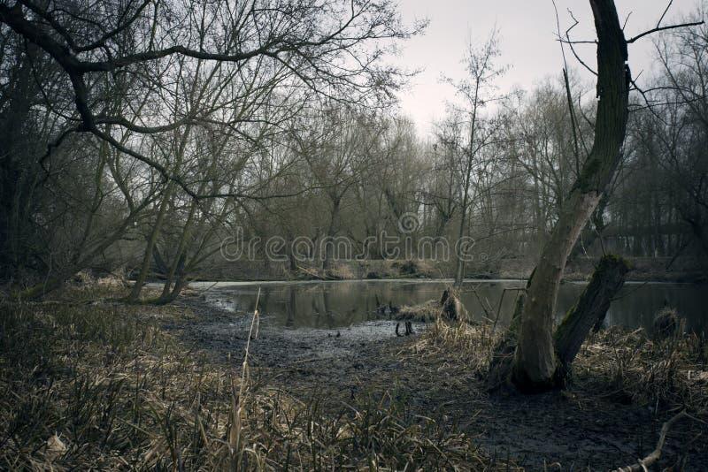 Bagna w jesieni Chłodno ciemny jezioro w pradawnym lesie zdjęcie royalty free