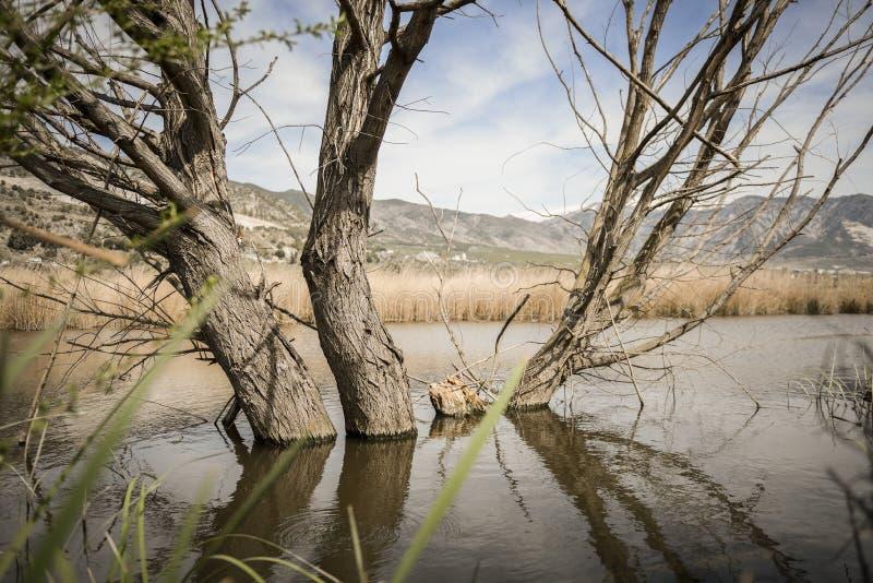 Bagna z bagno roślinnością w Padul zdjęcie royalty free
